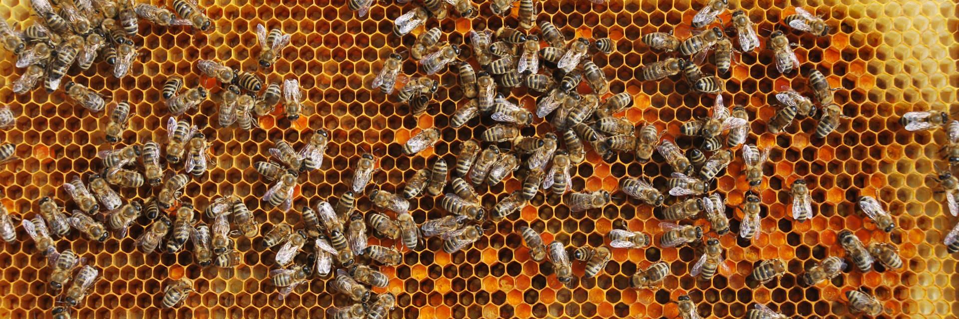 Slavnosti s naším medovým stánkem